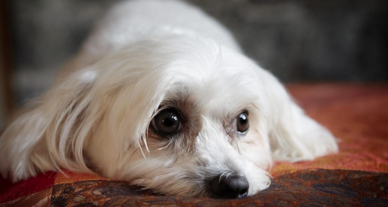 dogprojectdog-COCO