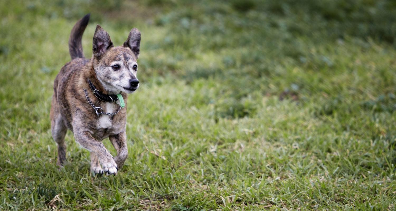 dogprojectdog-JESSIE